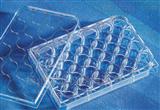 康寧Corning 低吸附細胞培養板(24 96孔)