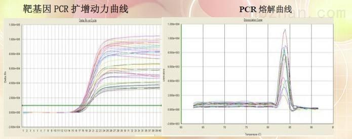 实时荧光定量PCR检测