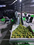 KL-350X绿皮脐橙包装机