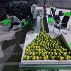 绿皮脐橙包装机