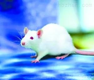 动物实验活体成像