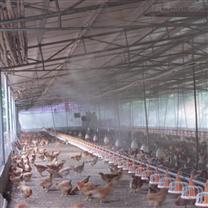 养殖场防暑降温措施 高压喷雾降温雷竞技官网app