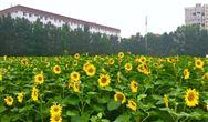 《重點生態保護修復治理資金管理辦法》發布