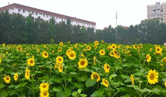 年產生總量不超過10噸 上海這類危廢被列入重點監管名單