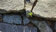 行業大咖如何看待土壤修複? 兩類創新為探索開路