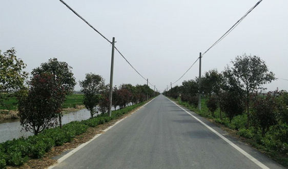 江苏省滨海县滨海港镇分类施策整治农村人居环境