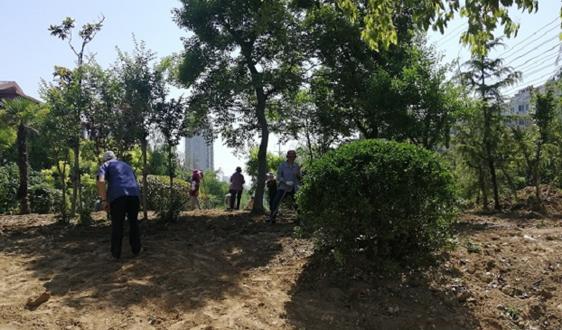 江蘇省濱??h城管局積極做好縣城綠化養護工作