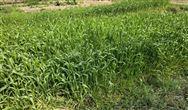 湖北省農業農村廳印發《湖北省農業農村汙染治理實施方案》