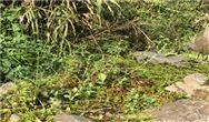 污水处理厂冬季低温导致的污泥膨胀的原因及对策!