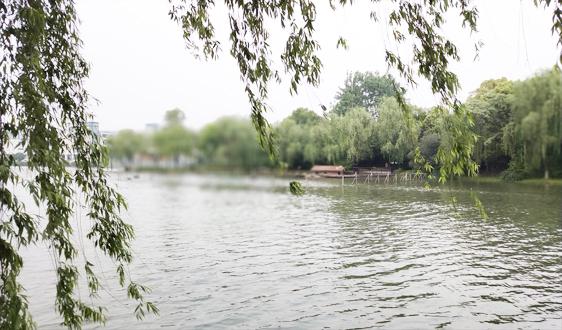 """13载投入逾1000亿 蝶变中太湖治理仍面""""减磷""""挑战"""
