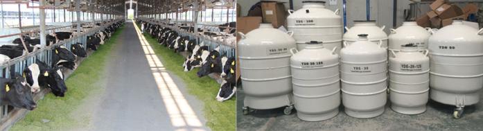 畜牧精ye液氮罐处理方法