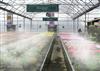 大棚喷雾降温培育花盆植物